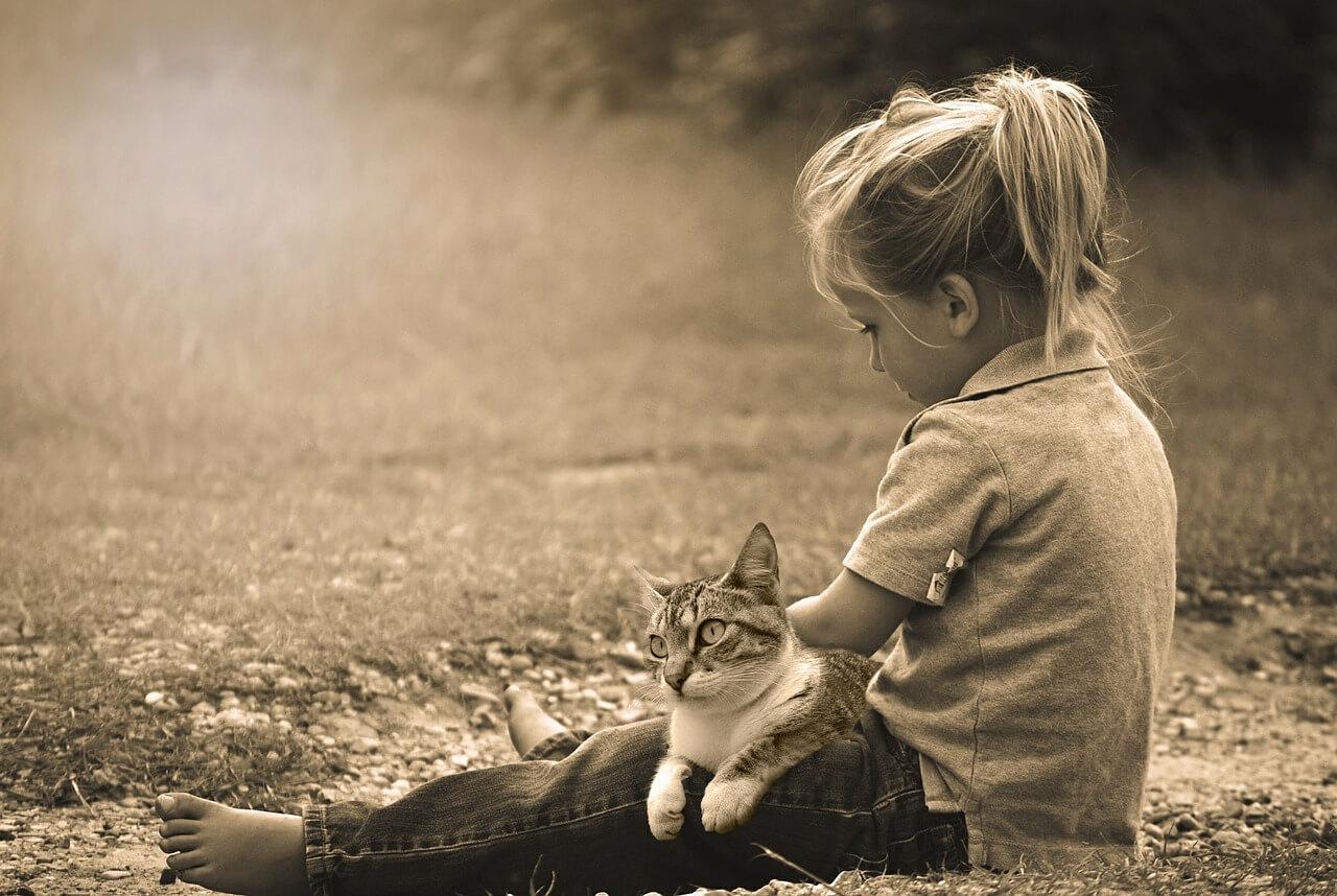 домашние животные как источник заразы